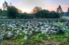 在草之间的蜘蛛网 免版税库存图片
