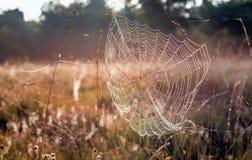 在草之间词根的满地露水的蜘蛛网  免版税库存图片