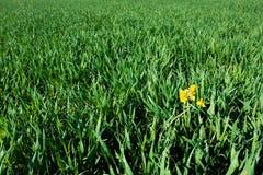 在草之间的花 免版税库存图片