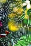 在草关闭上的蜘蛛网 库存图片