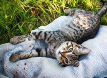 在草关闭的镶边棕色和白色猫 库存照片
