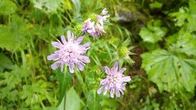 在草前面的紫色花 图库摄影