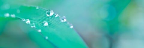 在草叶子的水滴有宏观看法 免版税库存照片
