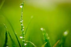 在草叶的冬天露水 库存照片