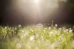 在草叶的早晨光 库存图片