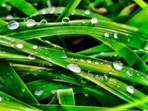 在草叶的雨小滴 免版税库存图片