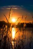在草后的美丽如画的日落 库存照片