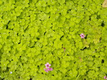在草和叶子的露水 库存照片