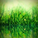 在草和瓢虫的美好的新早晨露水小滴 水反射,光 宏指令 浅深度 设计的gr模板 免版税图库摄影