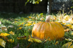 在草和秋叶的南瓜 免版税图库摄影