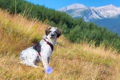 在草和高山的白色和黑模糊的狗在背景,自由旅行概念 免版税库存照片