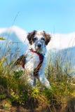 在草和高山的白色和黑模糊的狗在背景 免版税库存照片