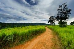 在草地之间的土壤路与天空 免版税库存图片