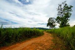 在草地之间的土壤路与天空 库存图片