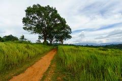 在草地之间的土壤路与天空 库存照片