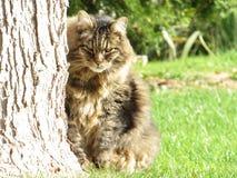 在草地动物的猫 免版税库存图片