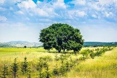 在草地的一棵树 库存照片