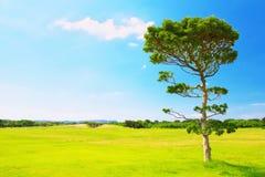在草地的一棵树 免版税库存图片