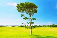 在草地的一棵树 免版税库存照片