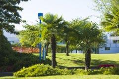 在草地的棕榈树 免版税库存图片