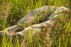 在草地的石头与开花的与浅DOF的三叶草夏天新鲜的背景选择聚焦宏观射击 库存图片
