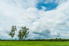 在草地的结构树与云彩和蓝天 库存图片