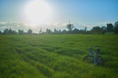 在草地的自行车早晨 免版税库存照片