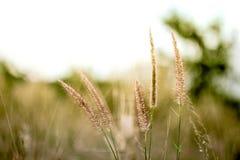 在草地的草花 库存照片