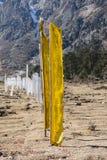 在草地的黄色西藏祷告旗子在Yumthang谷附近在Lachung的冬天 北部锡金,印度 免版税库存照片
