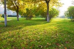 在草坪日落的下落的叶子 库存照片