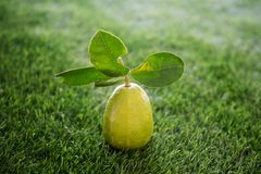 在草坪的化学制品免费柠檬 免版税库存照片
