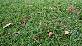 在草坪的叶子秋天 库存照片