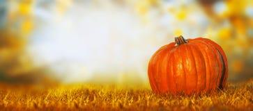 在草坪的大南瓜在秋天自然背景,横幅 免版税库存照片