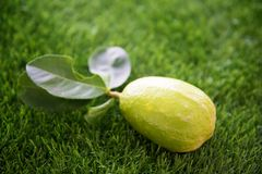 在草坪的新鲜的有机柠檬 免版税图库摄影