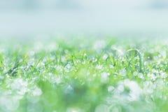 在草坪的早晨露水有水下落的在早晨天 图库摄影