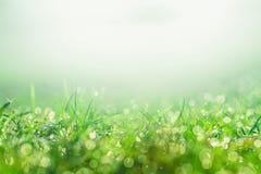 在草坪的早晨露水有水下落的在早晨天 库存图片