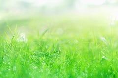 在草坪的早晨露水有水下落的在早晨天 免版税库存图片