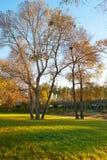 在草坪的树morningtide风景的 免版税库存照片