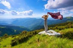 在草坪的白色岩石长的礼服和帽子的女孩 库存图片