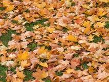 在草坪的秋叶 免版税库存图片
