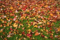 在草坪的秋天叶子 免版税库存照片