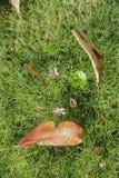 在草坪的自然早晨 库存照片