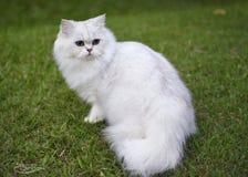 在草坪的逗人喜爱的猫 库存照片