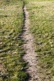 在草坪的道路 免版税库存图片