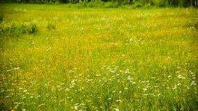 在草坪的野花在森林里 免版税库存图片