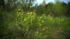在草坪的野花在森林里 股票录像