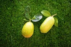 在草坪的顶视图有机柠檬 图库摄影