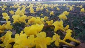 在草坪的黄色花 免版税库存照片