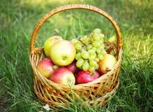 在草坪的水果篮有草的 免版税库存图片