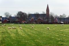 在草坪的绵羊在村庄房子和教会对面 库存图片